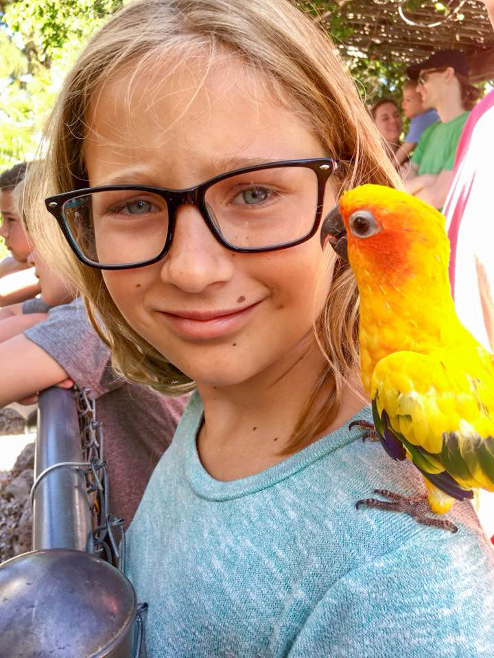 sun conure on girls shoulder
